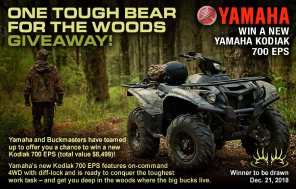 One Tough Bear For The Woods Giveaway