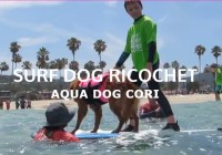 Surf Dog Ricochet Surf's Up Sweepstakes