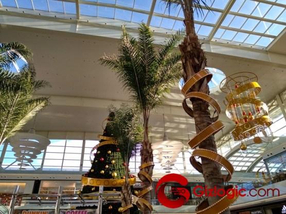 palm palm