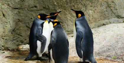La realidad virtual quiere salvar a los pingüinos