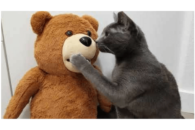 Lexa Bear, el oso de peluche que funciona como asistente personal