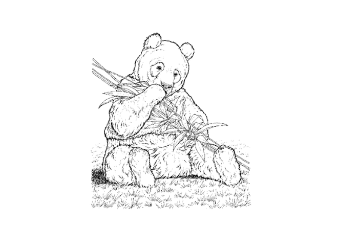 imagen de dibujo en blanco y negro de un oso panda
