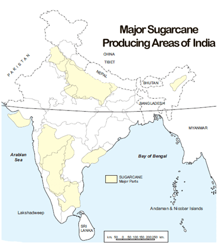 places where cotton is grown in india