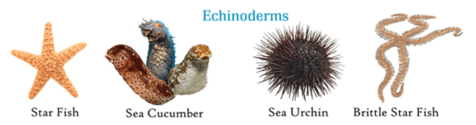 echinoderms general knowledge today