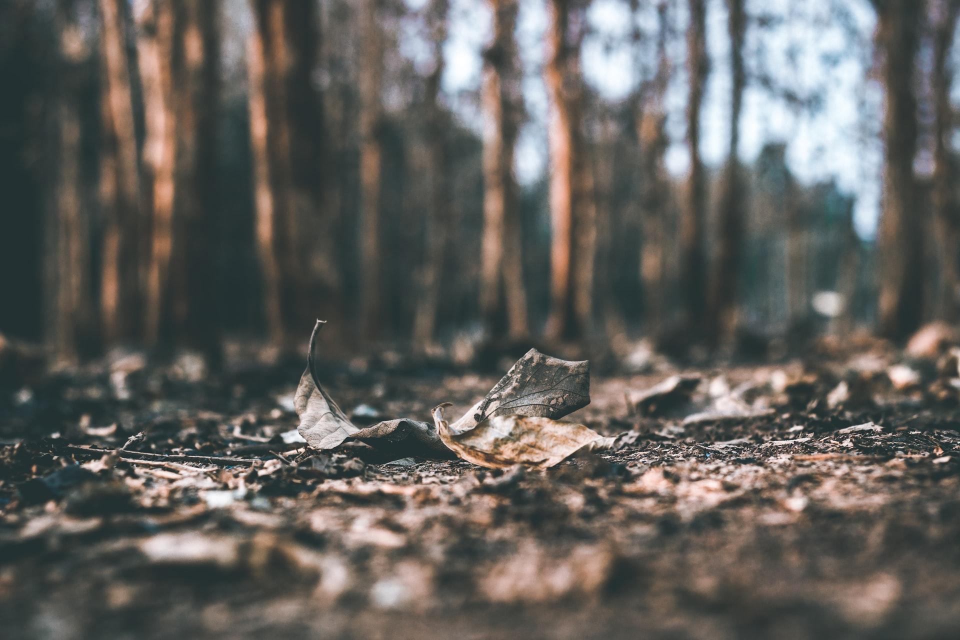 Grond en bladeren in een herfstbos