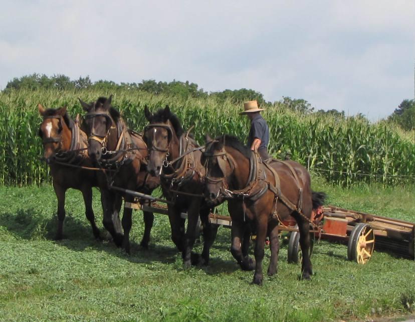 Amish_Farmer