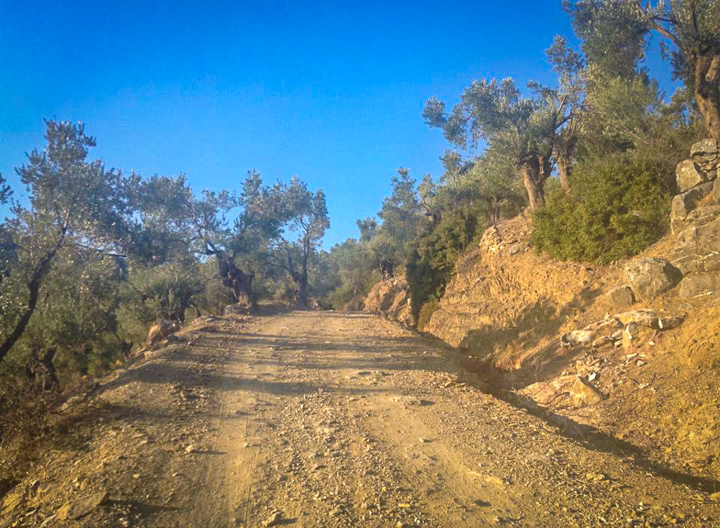 Country road to our WWOOF farm in Lesvos