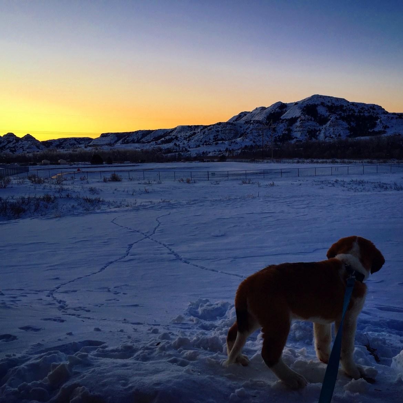 Saint Bernard in North Dakota | Midwest Winter Gear