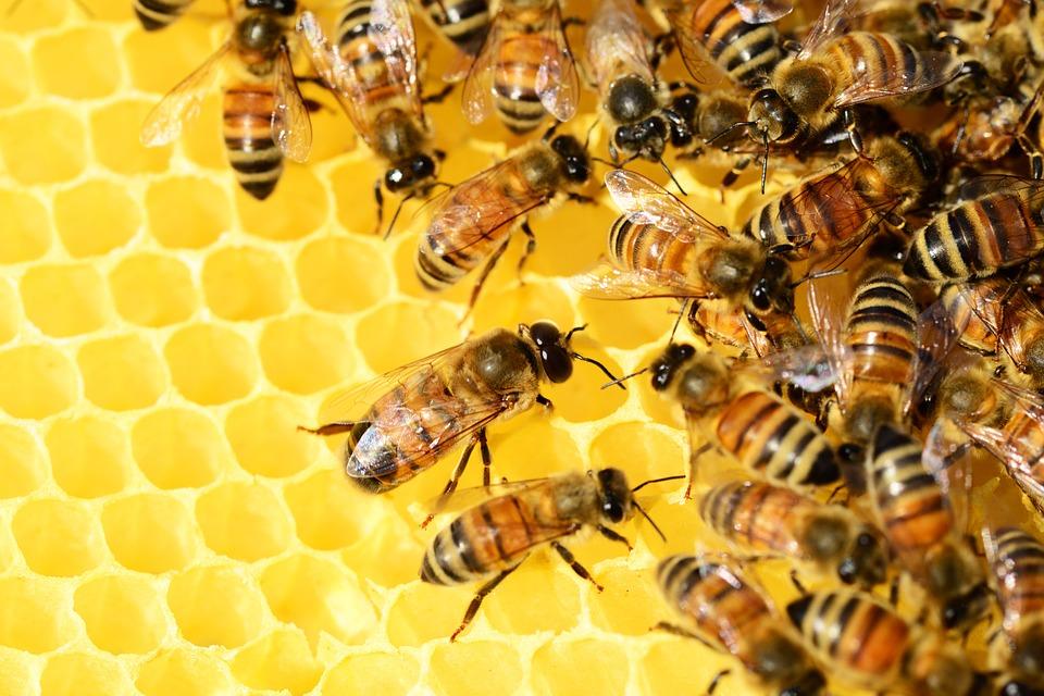 Bee hive Missha bee pollen ampouler