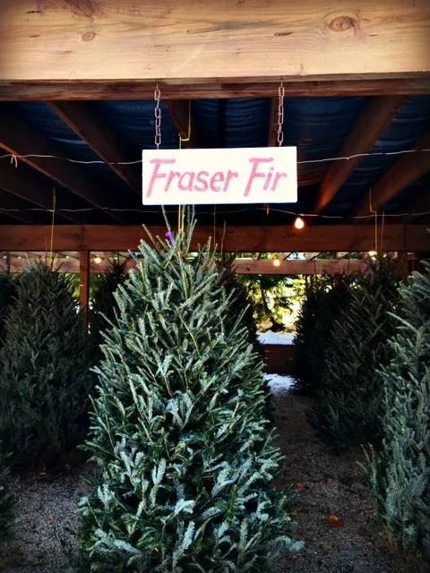 FraserFir