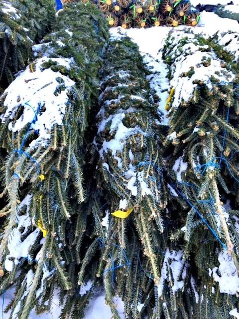 PileOfTrees