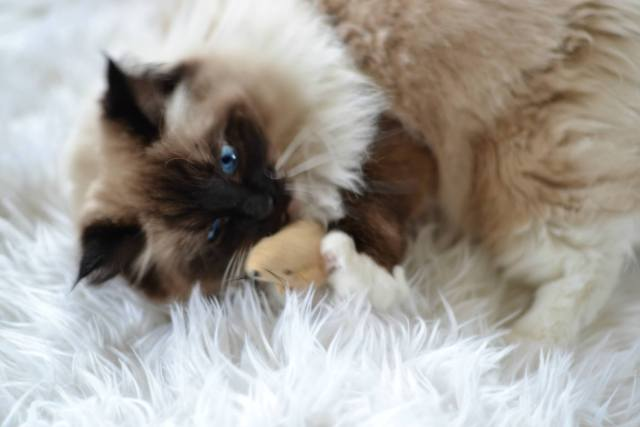 Spoil Your Kitty with a Cat Subscription Box!