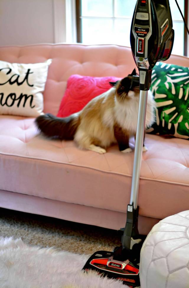 Why You'll Want this (affordable) Vacuum for Pets! | GlamKaren.com