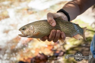 Such odd looking rainbow trout—light green with no colors.