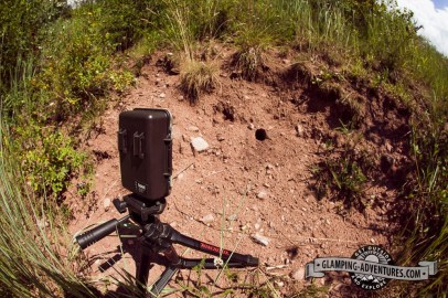 Gamecam waiting on a ground squirrel.