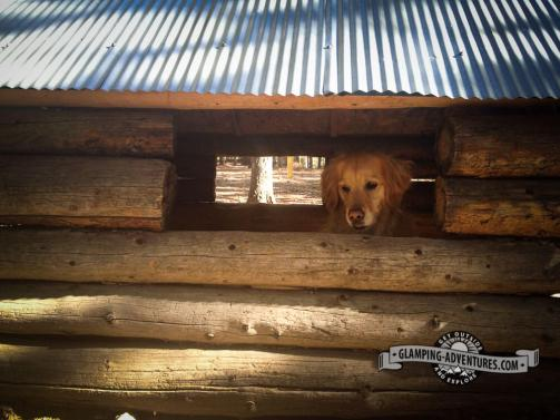 Daisy found a large dog house in the campground! Golden Gate Canyon S.P.