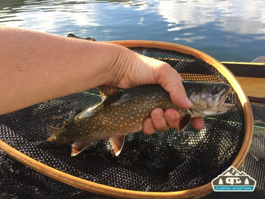 Big Brook Trout, Libby Lake, WY.