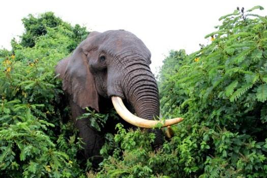 03-aberdare-elephant-HoneyTrek