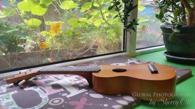 shared ukulele