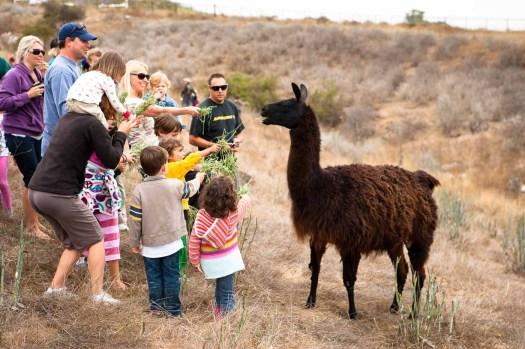 Feeding-the-Llama