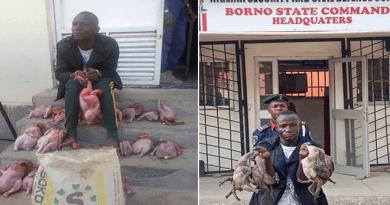 Dead Poultry Meat