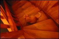 Comme lui, j'attends, en regardant vers le bas. (Le Chat, Craponne, novembre 2003.)