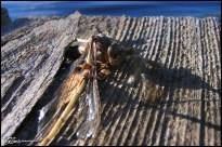 Rest. (Van Bruyssel, Canada, septembre 2004.)