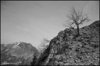 Dry. (Mont Pécloz, France, mai 2006)