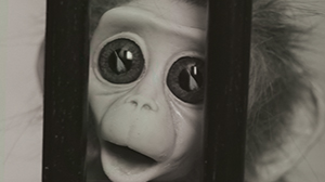 Monkey_Love_Experiments_300