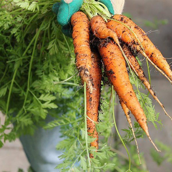 glosgow children's food programme