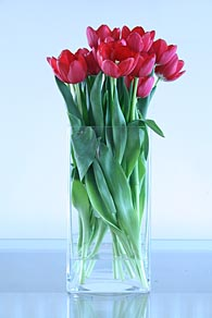 Photo: More Red tulips.