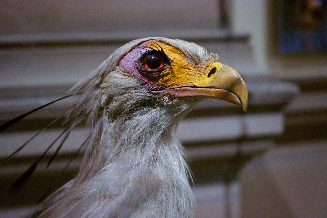 Stuffed eagle