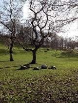 <h5>Kelvingrove Park</h5>