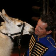 runaway llama