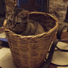 basket last para