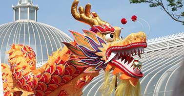 West End Festival Parade Dragon