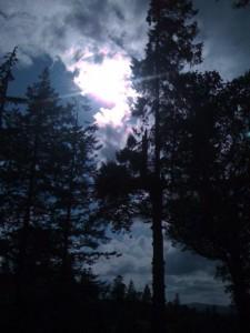 ardkinglas-woodland-225x300