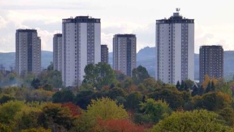 The Urban Jungle. Glasgow.