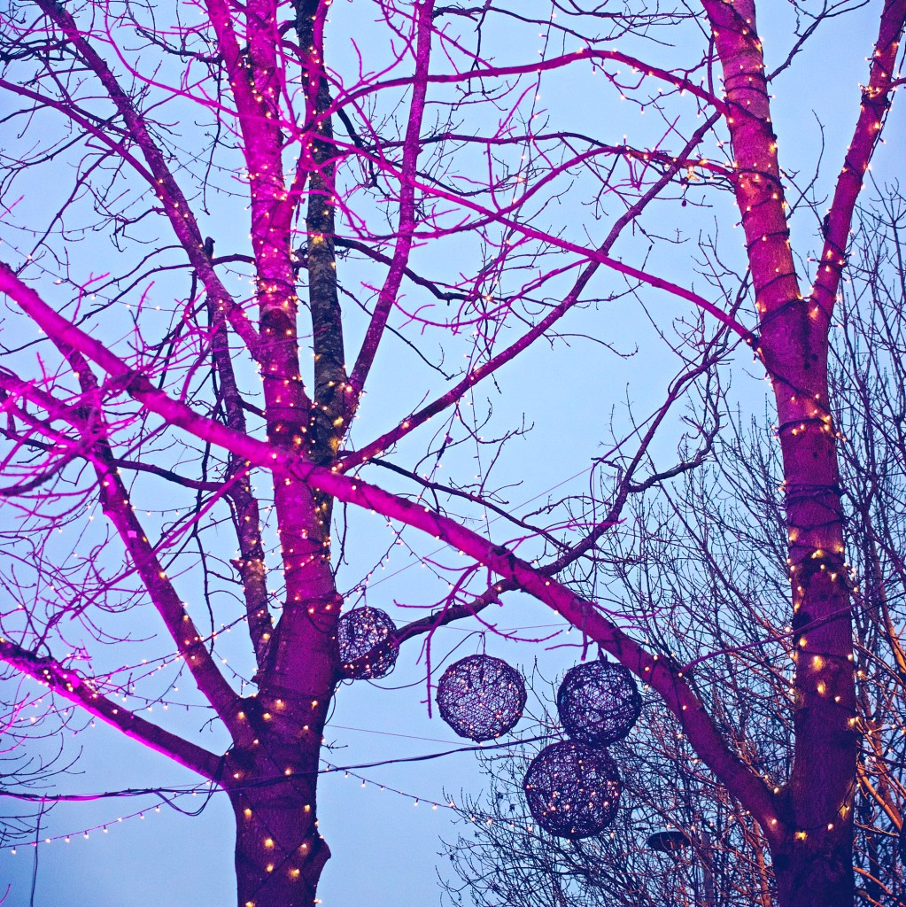 Colourful lit Up Trees