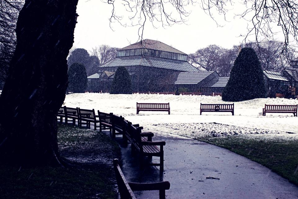 snow botanics 2018