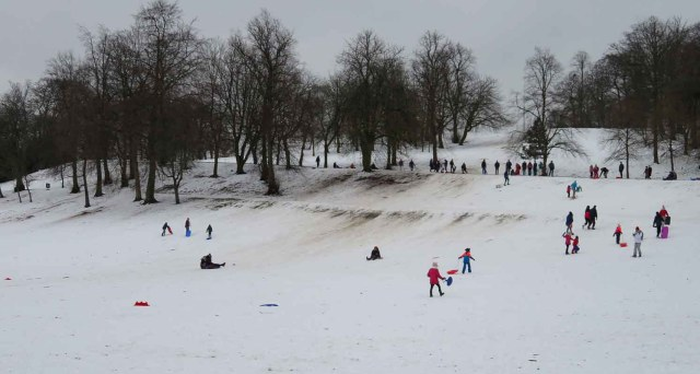 Queen's Park. Glasgow's South Side. Sledge Fun