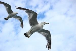 seagull-623520_960_720
