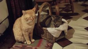 first para cats