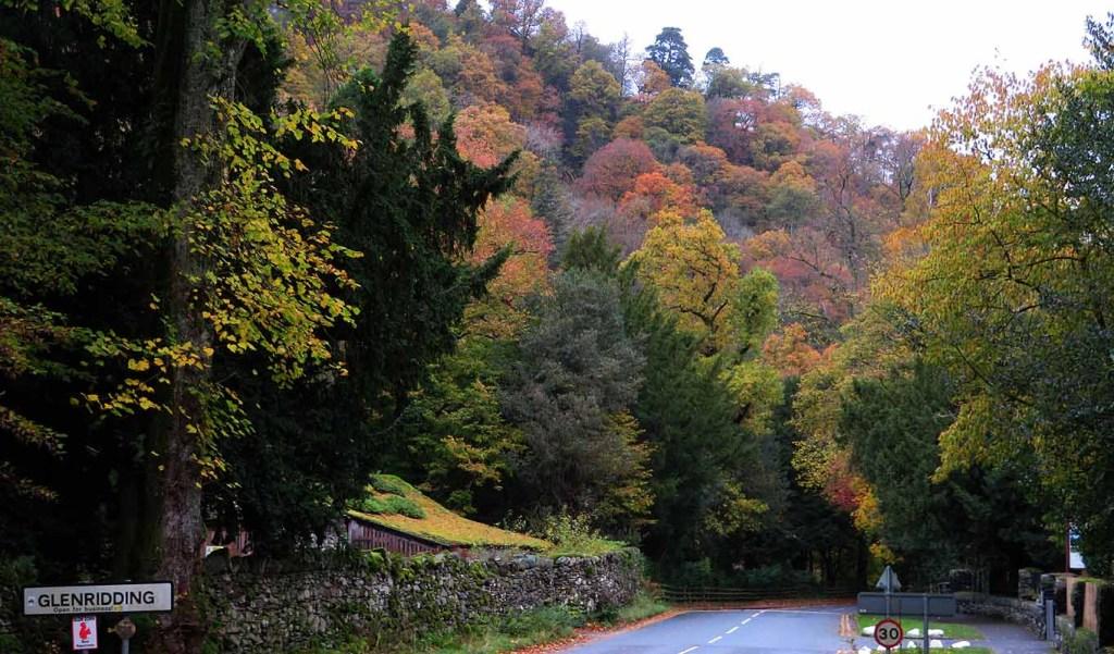 A Magic Realm. Lake District Trees
