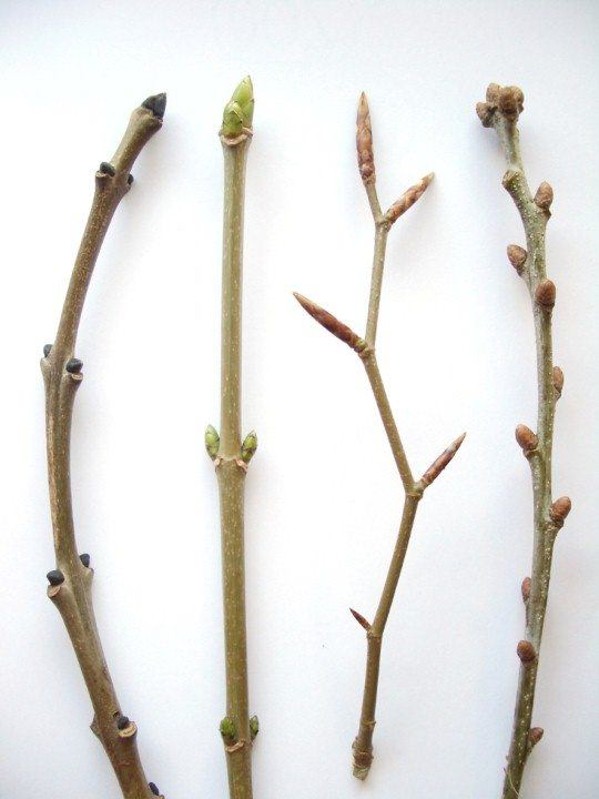 twigs winter trees
