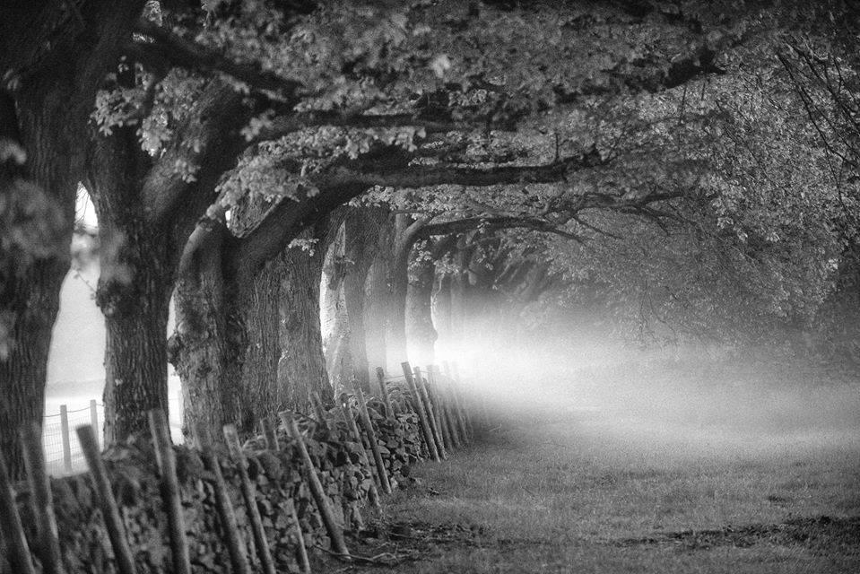 eyam mist on road