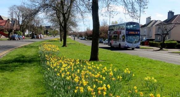 great western road bus daffodills