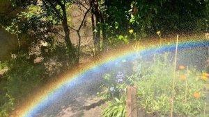 rainbow woodlands