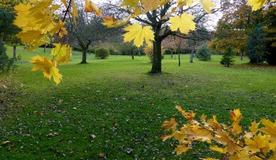 Autumn Morning. Rouken Glen Park. Glasgow