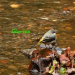 Introductions to birding in Glasgow - with Scott Rogers Part IV(Nature Recovery)